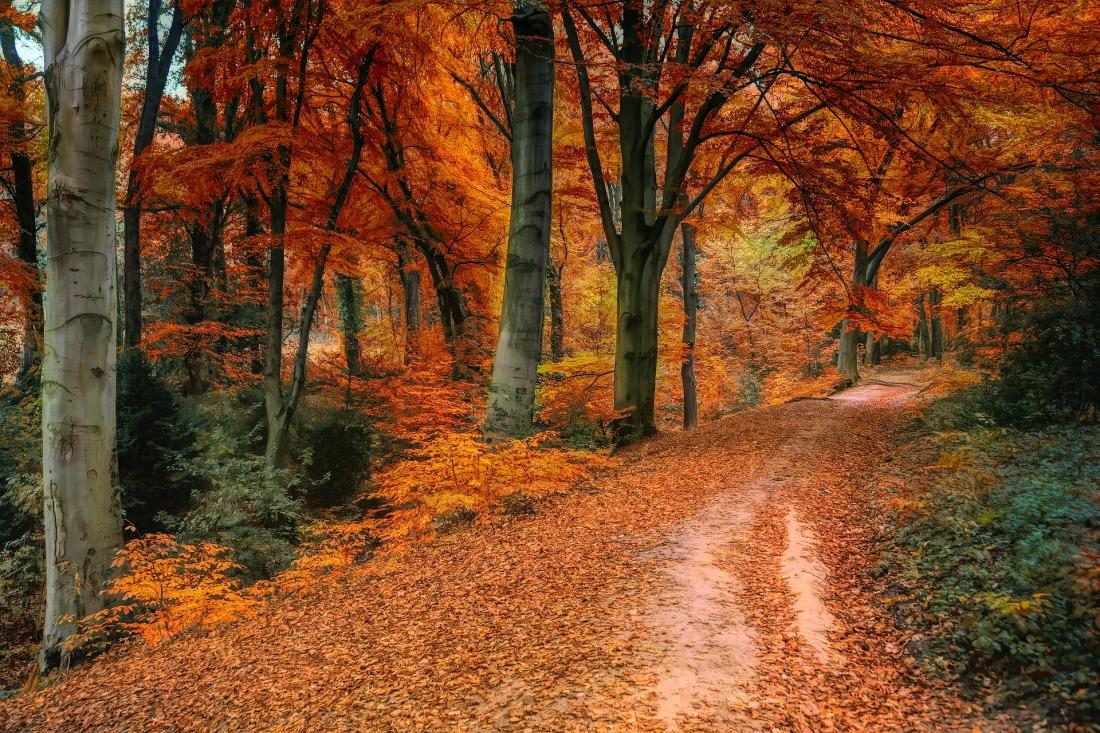 autumn-3842589_1920