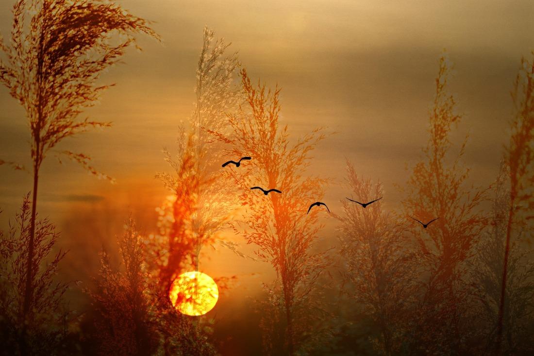 sunset-3956389_1920