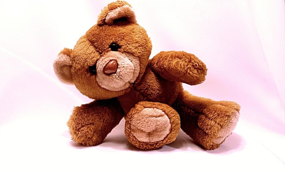 bear-678606_1280