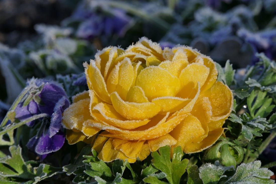 flower-4069786_1920