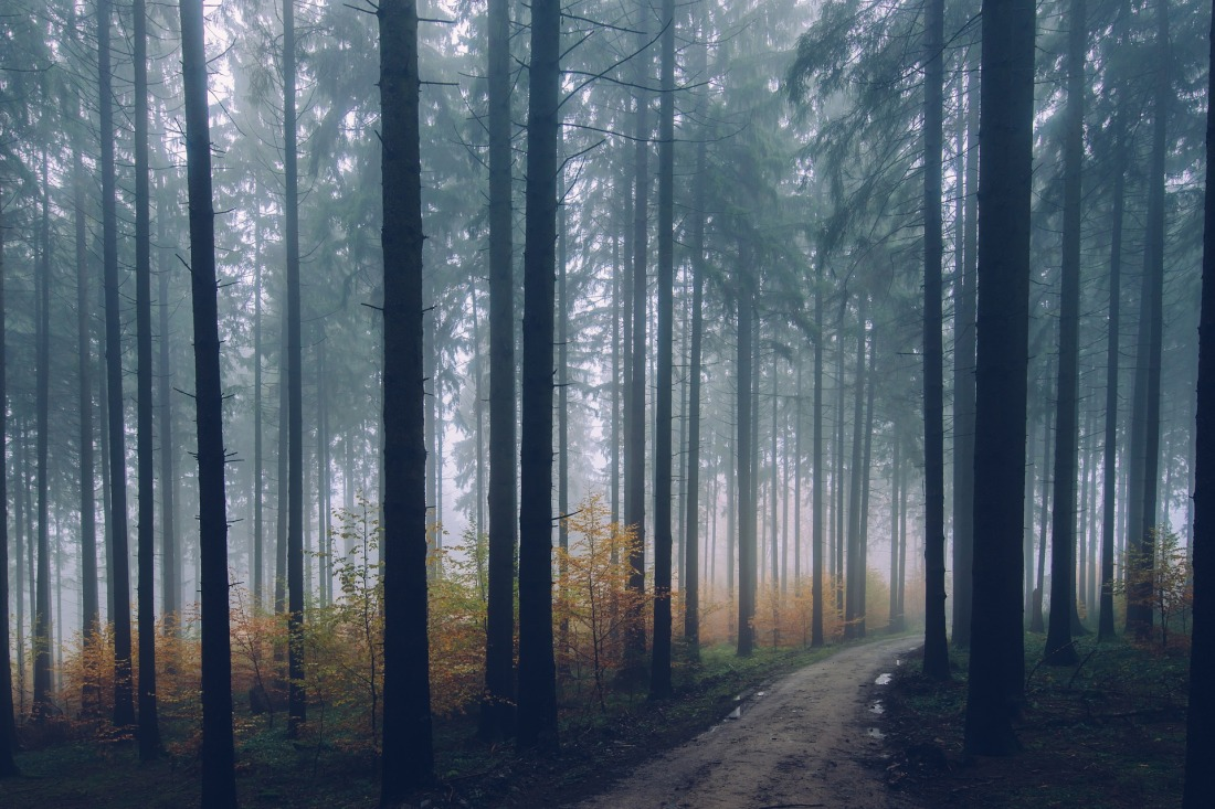 forest-2179318_1920