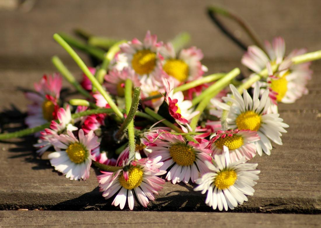 daisies-4098808_1920