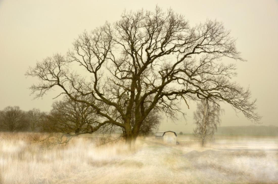 tree-4173417_1920