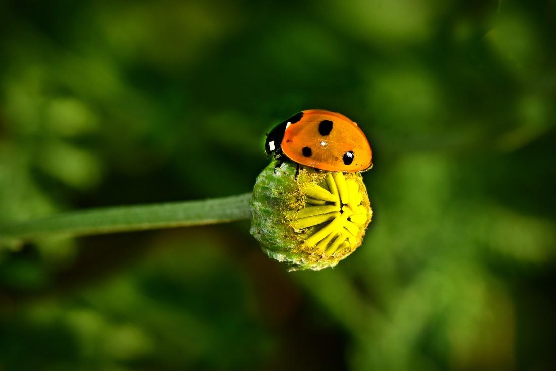 ladybug-4276243_1920
