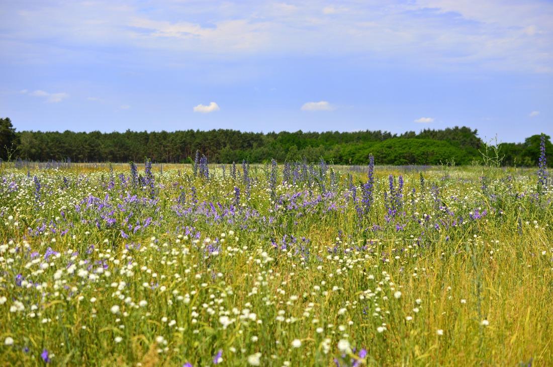 meadow-4271571_1920