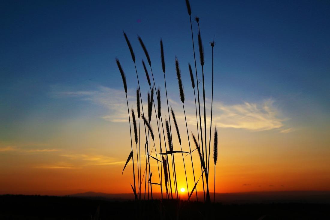 sunset-4274662_1920