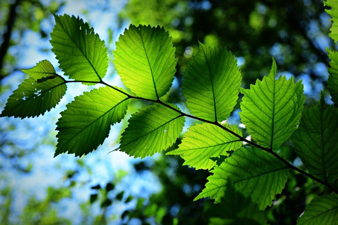 leaf-4339680_1920