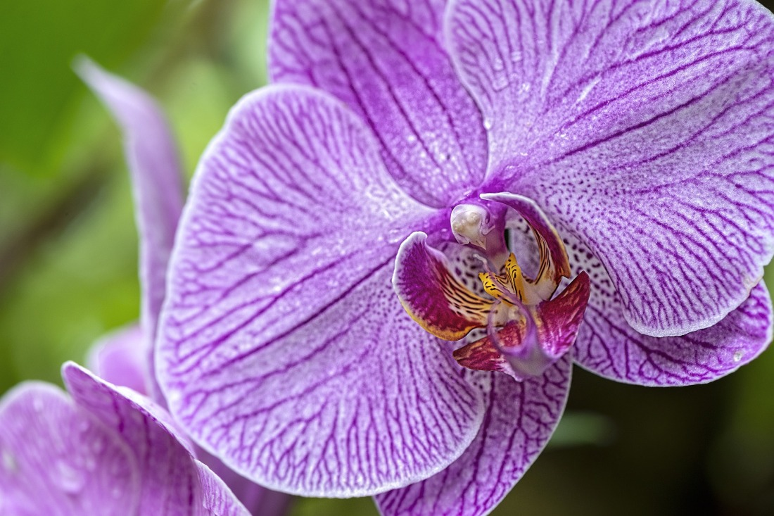 orchid-4363708_1920