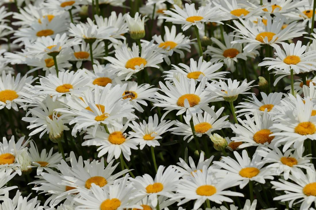 flowers-4377382_1920