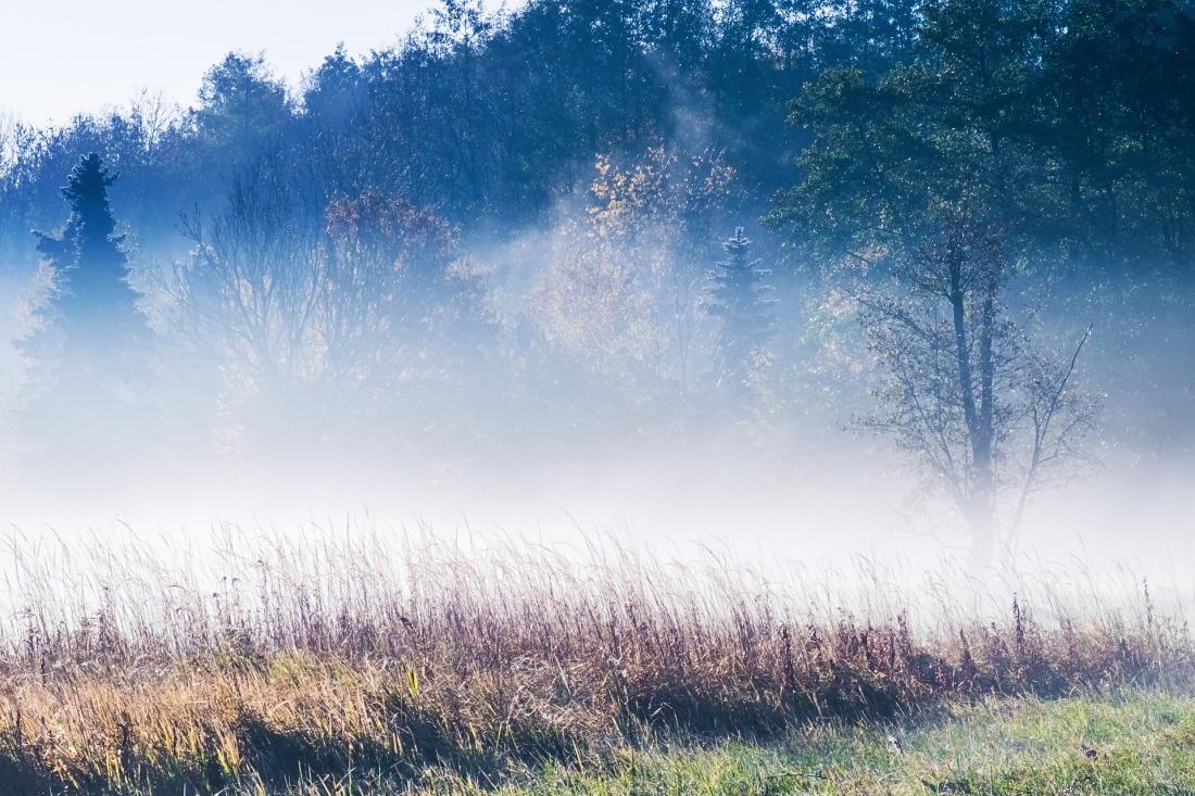 fog-4529475_1920