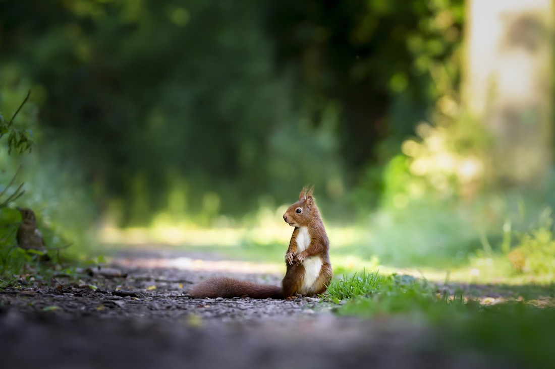 squirrel-4515962_1920