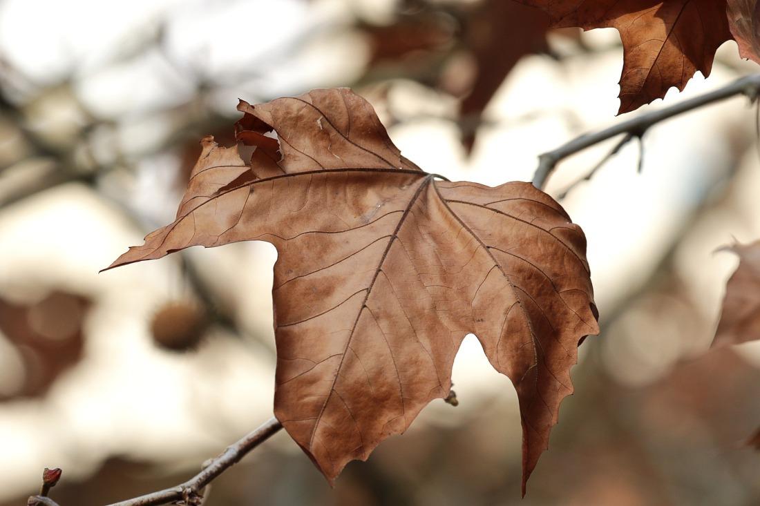 tree-4578319_1920