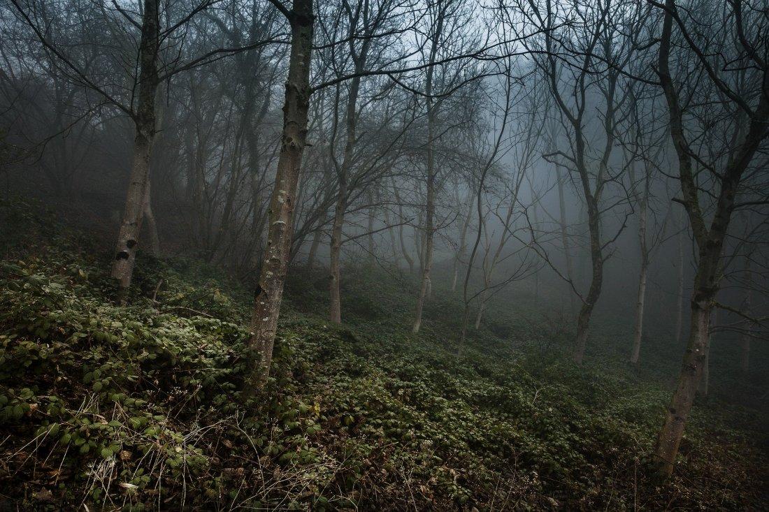 foggy-4660940_1920