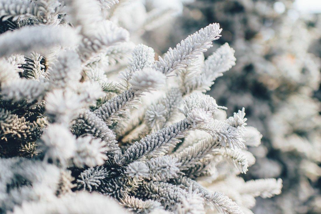 frosty-1081851_1920