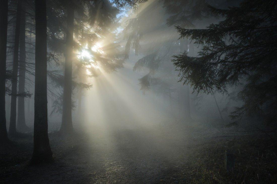 sunbeam-1547273_1920