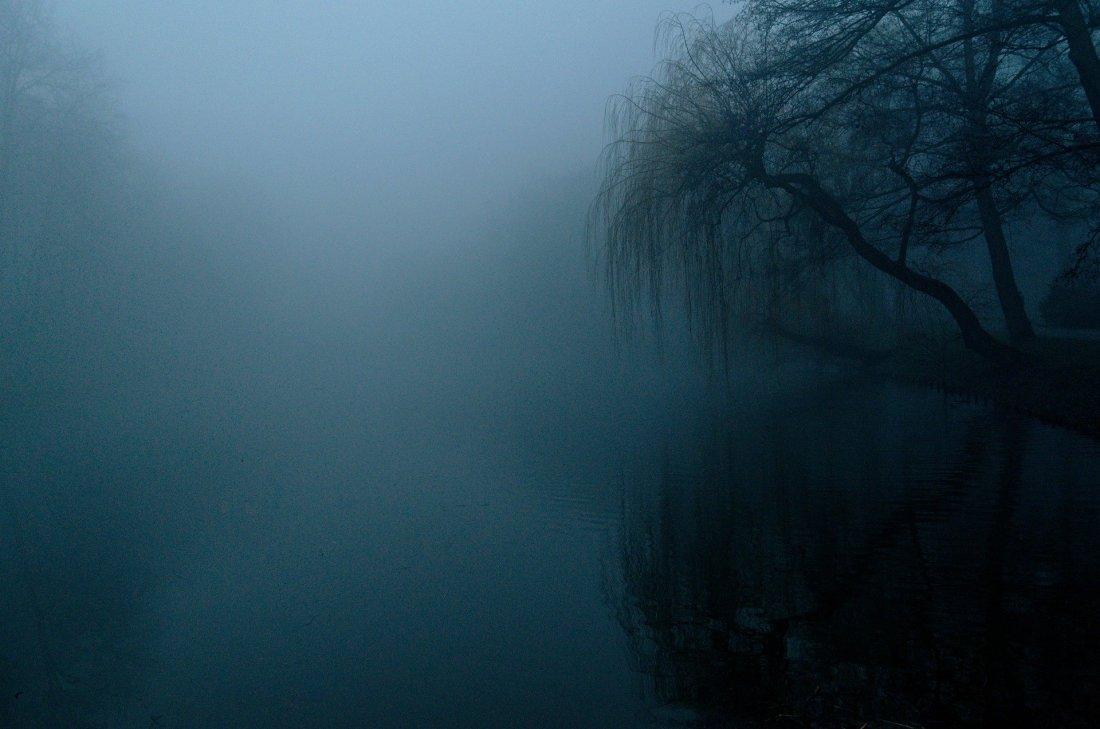 the-fog-4909513_1920