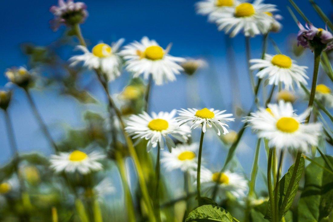 spring-5062124_1920