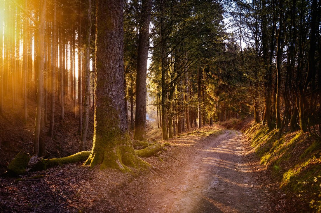 forest-5038025_1920