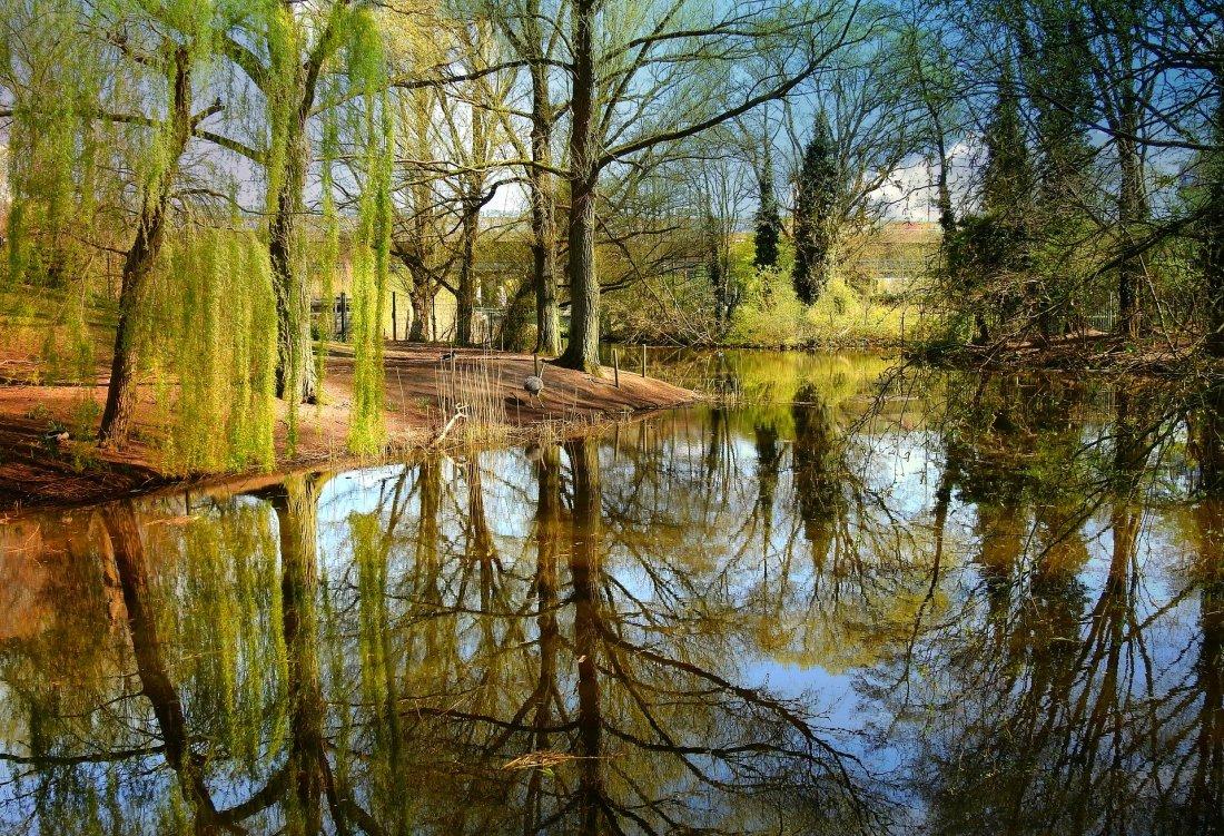 pond-5135097_1920