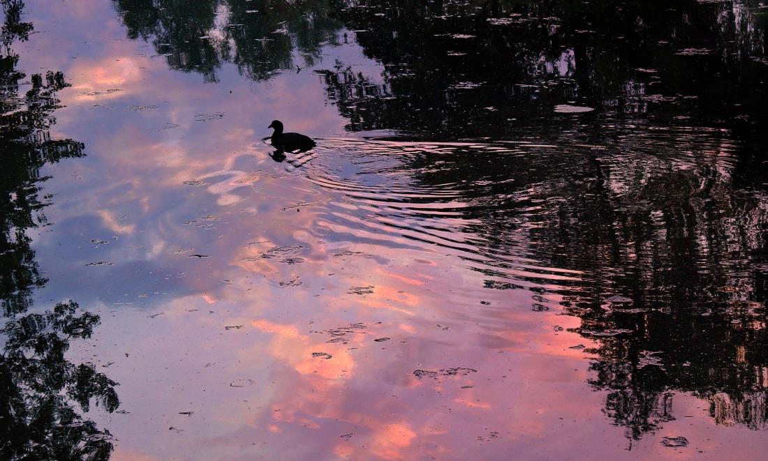 pond-5209108_1920