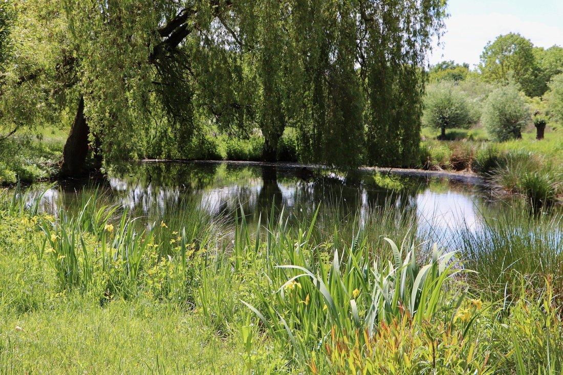 meadowlands-5238750_1920