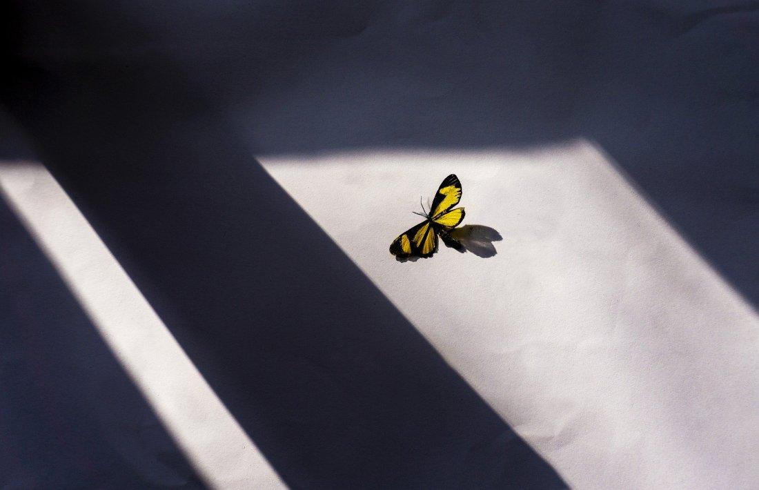 butterfly-5344157_1920